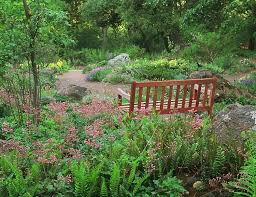 california native plant gardens native plants terra ferma landscapes