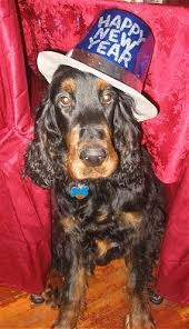 new year s setters gordon setter dog breed pictures 2