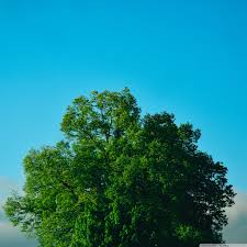 green tree blue sky 4k hd desktop wallpaper for 4k ultra hd tv