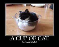 Cat Lover Meme - a cup of cat every recipe calls for it 4chan lover meme and