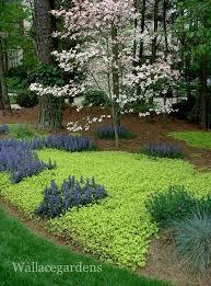 Low Maintenance Plants And Flowers - best 25 low maintenance shrubs ideas on pinterest low