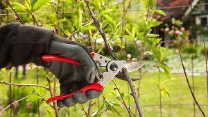 fertiliser for native plants when u0026 how to fertilizer your fruit trees organic gardening blog