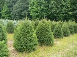 ucut christmas trees christmas lights decoration