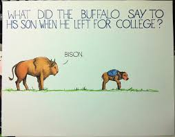 bison pun another beautiful day in paradise