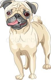 portrait of serious yellow gun dog breed chinese shar pei stock