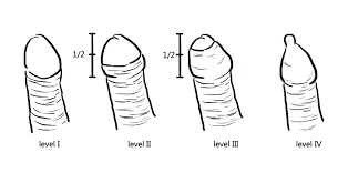 foreskin penis|Pornhub