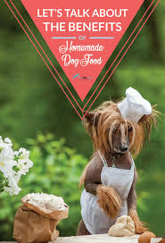 benefits of feeding dogs homemade dog food u2013 top dog tips