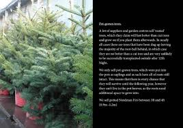 spruce pine and fir christmas trees stagsden christmas trees