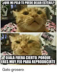imagenes groseras de gatos 25 best memes about memes memes meme generator