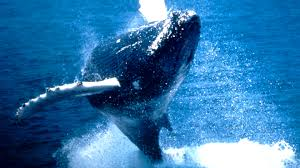 new england aquarium whale watch boston tickets n a at boston
