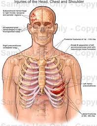 human chest anatomy shikaku j info