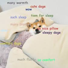 Doge Girl Meme - cute doge meme is ready for fluffy sleep