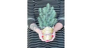 wrapped mini tree last minute diy gifts popsugar smart living