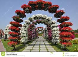 dubai miracle garden in the uae editorial stock photo image