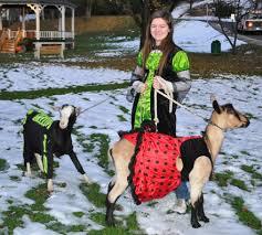 Goat Halloween Costume Halloween Costumes Hoosick Falls Eastwick Press