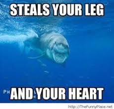 Funny Shark Meme - staaahp so many tickles funny shark meme image for facebook