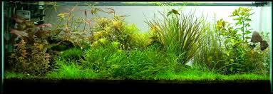 Tank Aquascape New 60 Gallon Aquascape Fish Tank Newbies