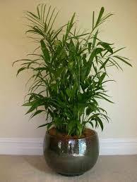 easy indoor plants indoor hanging plants silver color metal chain holders alongside