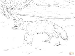 curious fennec fox coloring page free printable coloring pages