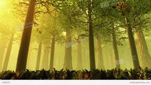 deep forest fairy tale scene 3d render stock animation 1246672