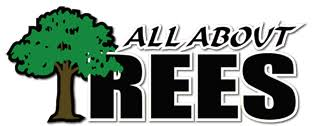 all about trees arborists tree removal cutting tree care
