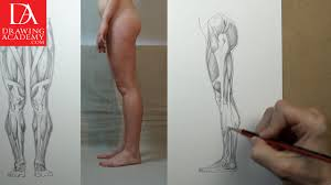 muscles of the leg video lesson by drawing academy drawing academy