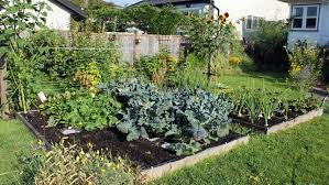 converting lawn into raised garden beds without waste