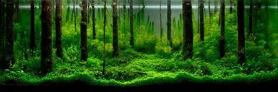 japanese aquarium introduction to planted aquarium the art of planted aquarium