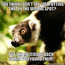 Lemur Meme - who meme edu mashup