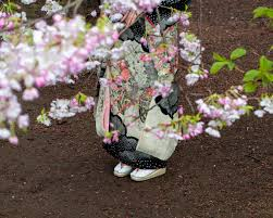embrace spring with pictures of japan u0027s cherry blossoms