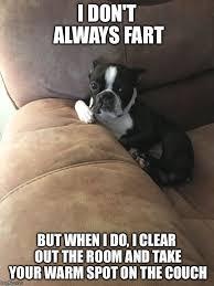 Boston Terrier Meme - boston terrier friendly and bright terrier meme and dog