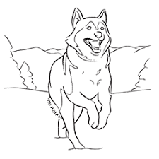 siberian husky coloring coloring pages adults