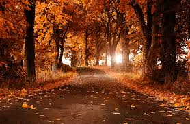 imagenes de otoño para fondo de escritorio fondo escritorio bonito camino otoño