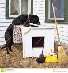 dog spring cleaning the dog house royalty free stock image image