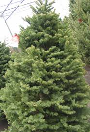 fresh cut christmas trees minneapolis st paul wagners greenhouses
