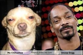 Snoop Dog Meme - my chihuahua totallylookslike com snoop dogg cheezburger funny