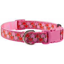 parade ribbon buy heart parade ribbon on pink dog collar with pink buckle online