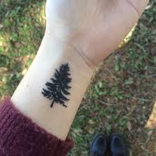 my small pine tree pinteres