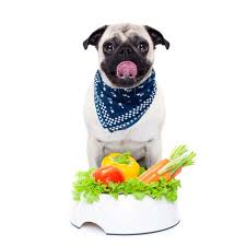 dog food for dogs with diabetes what you need to know u2013 top dog tips