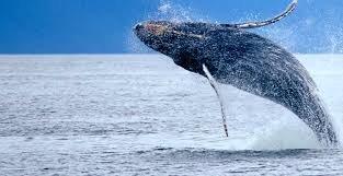 Alaska synonym for travel images Best cruises in alaska travel tips jpg