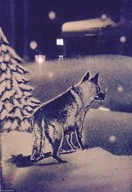Christmas Windows Decorations Spray Artist Tom Baker Uses Snow Spray To Create Winter Wonderlands On