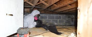 preventing mold growth in my nj crawl space