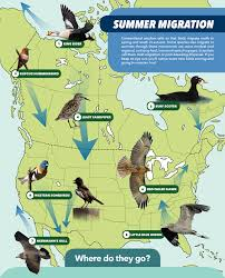 Western Florida Map by These 8 Unexpected Migration Routes Give You Reason To Go Birding