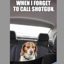 Dog Driving Meme - dog driving car funny dog driving car meme