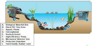 Building A Fish Pond In Your Backyard by List Of Pond Equipment Needed To Build A Watergarden
