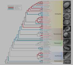 the tropics as ancient cradle of oribatid mite diversity pachl