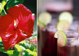 jamaica flower sorrel bissap jamaica hibiscus tea around the world kitchn