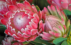 a passion for flowers spring a season of abundant opportunities