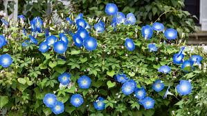 Fragrant Plants Florida - the south u0027s best fragrant plants for your garden southern living
