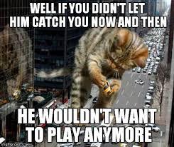 Tease Meme - don t tease the cat imgflip